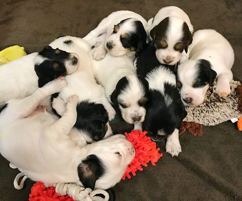 PUPPIES AT 3 WEEKS OLD!